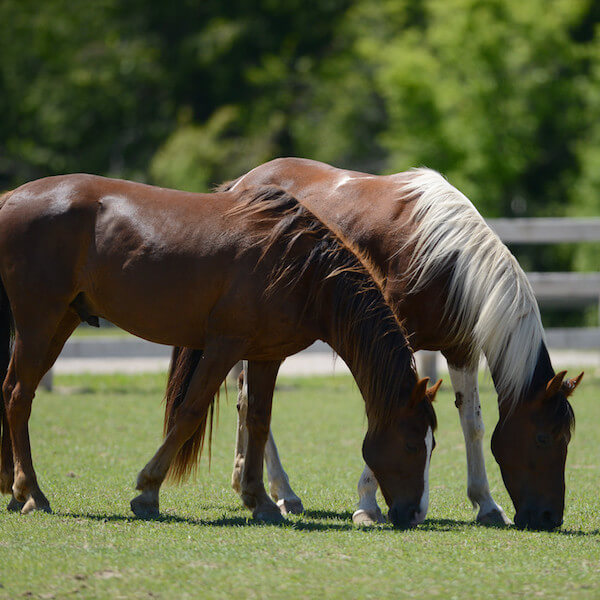 Dreamwinds Stables, Equestrian Centre Bradford, Riding Stables Ontario, Horse Boarding Bradford