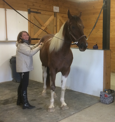 Discover Horses, Horsemanship, Equine Therapy, Learn to Ride