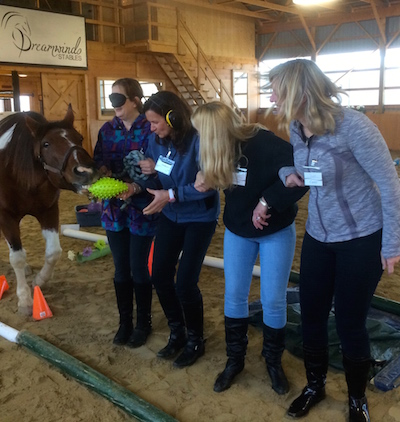 Ladies Night, Equine Assisted Learning, Girls Night Out, Team building