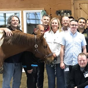 Equine Assisted Learning – Team Building, Teaching | Dreamwinds